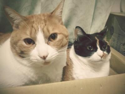 底の浅い段ボール箱に入っているソノラとパナシェ。今日はここで一緒に寝ていたようです。