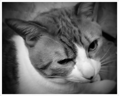 パナシェの寝起き顔。右目半分つむっててまだ眠そう。