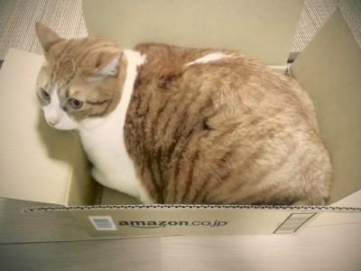 Amazon の段ボール箱の中にいるパナシェ。体がはみ出してる。