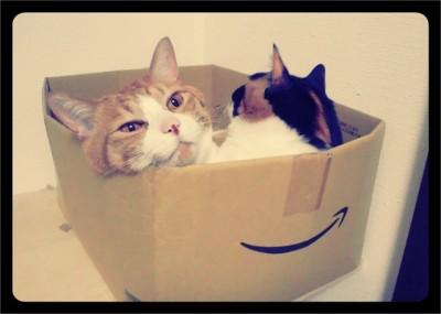 大きめの Amazon の箱に入っているソノラとパナシェ。パナシェは寝起きで変な顔になってる。